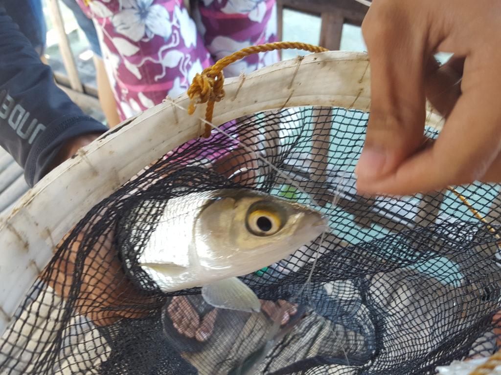 CO JORDAN魚釣り06 バゴス