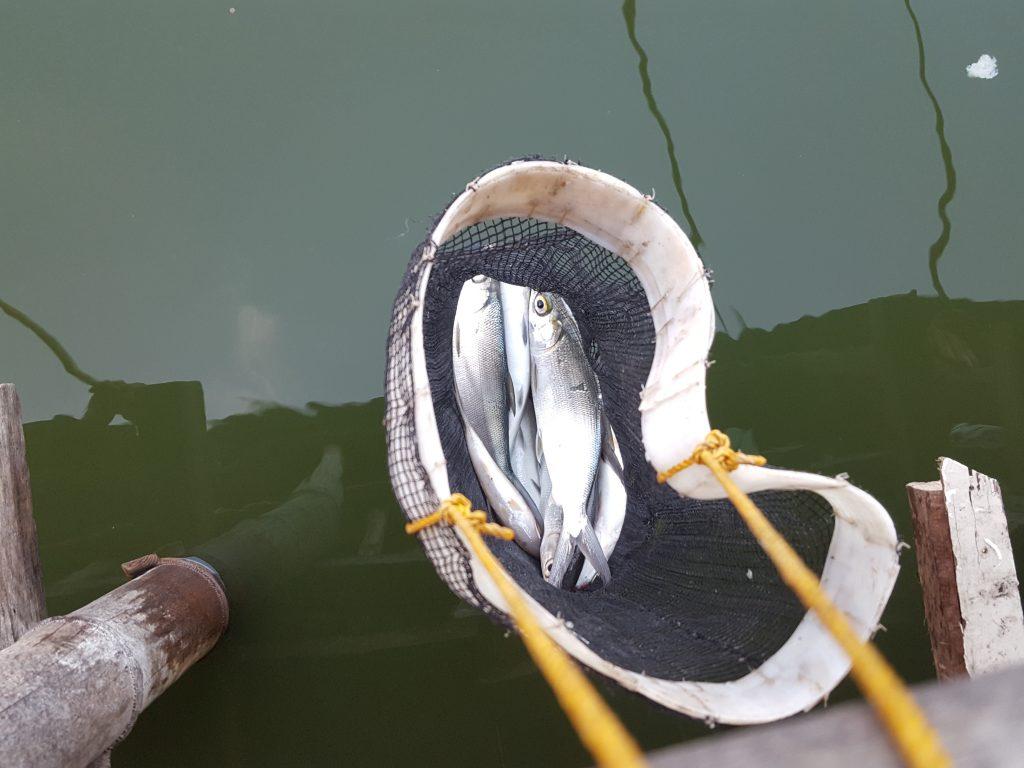 CO JORDAN魚釣り07 バゴス