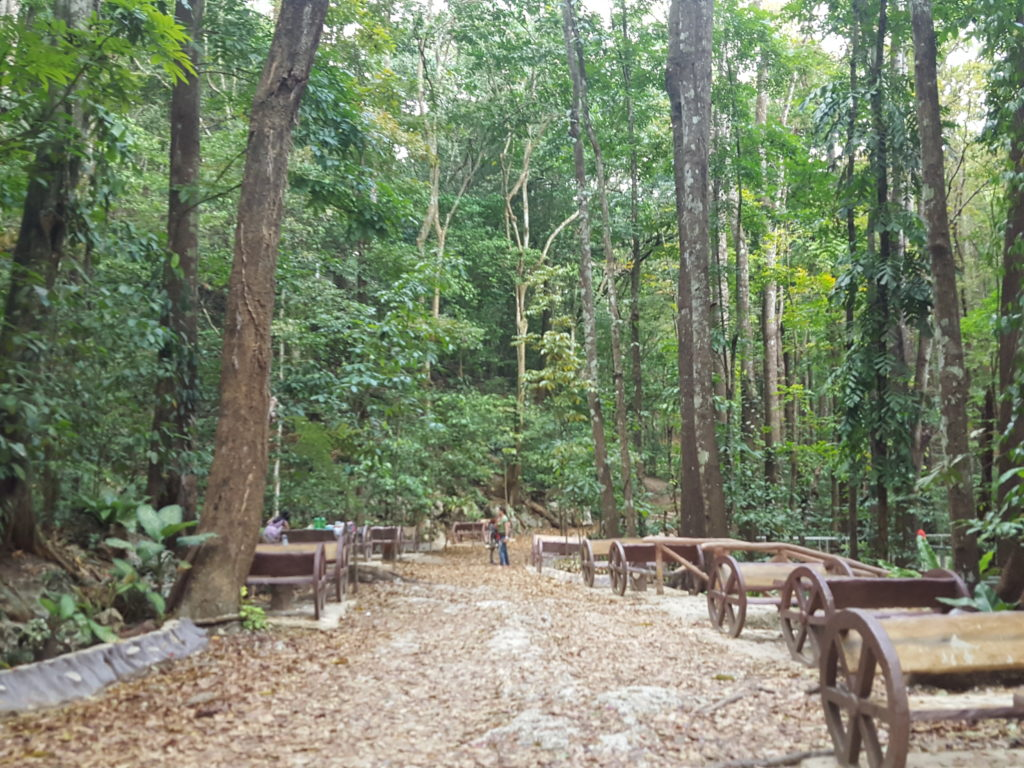 Loboc Man-Made Forest02