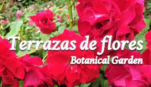 【おすすめ観光地】セブ島のバラ園『テラス・デ・フローレス(Terrazas de flores)』※動画有り