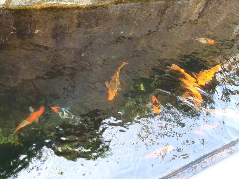 セブ・オーシャンパーク(Cebu Ocean Park)ジャングルトレック