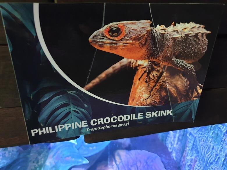 セブ・オーシャンパーク(Cebu Ocean Park)クリーピィクリッターズ(creepy critters)