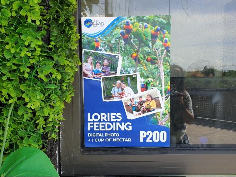 セブ・オーシャンパーク(Cebu Ocean Park)ロリーズ(Lories)