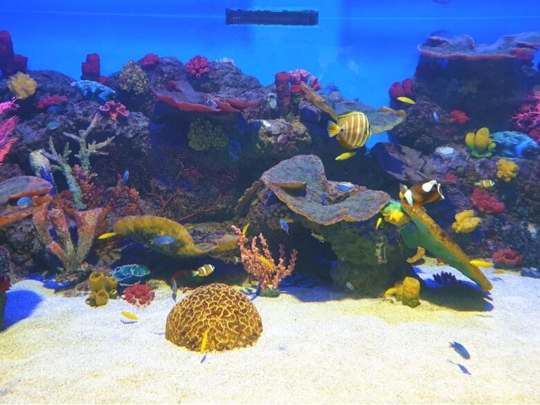 セブ・オーシャンパーク(Cebu Ocean Park)セブンシーズ(Seven Seas)