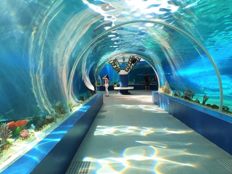 セブ・オーシャンパーク(Cebu Ocean Park)360Acrylic